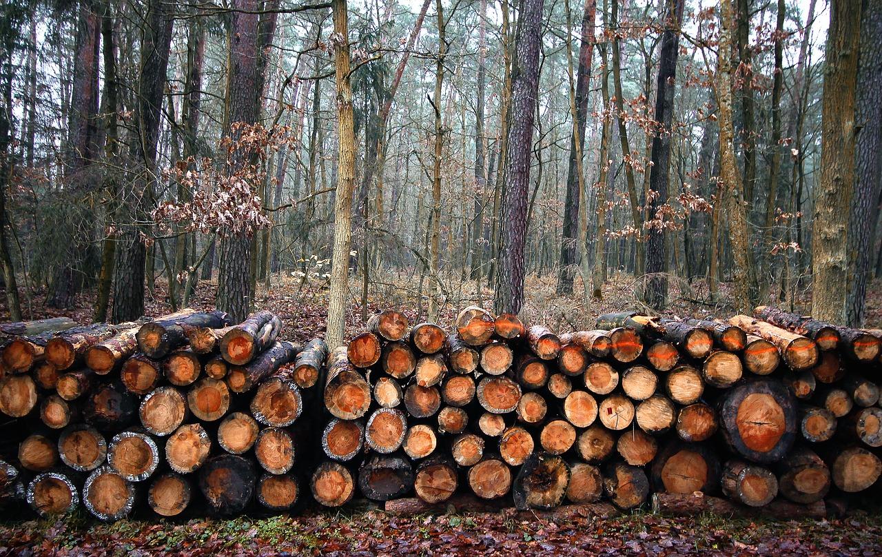fældede træer