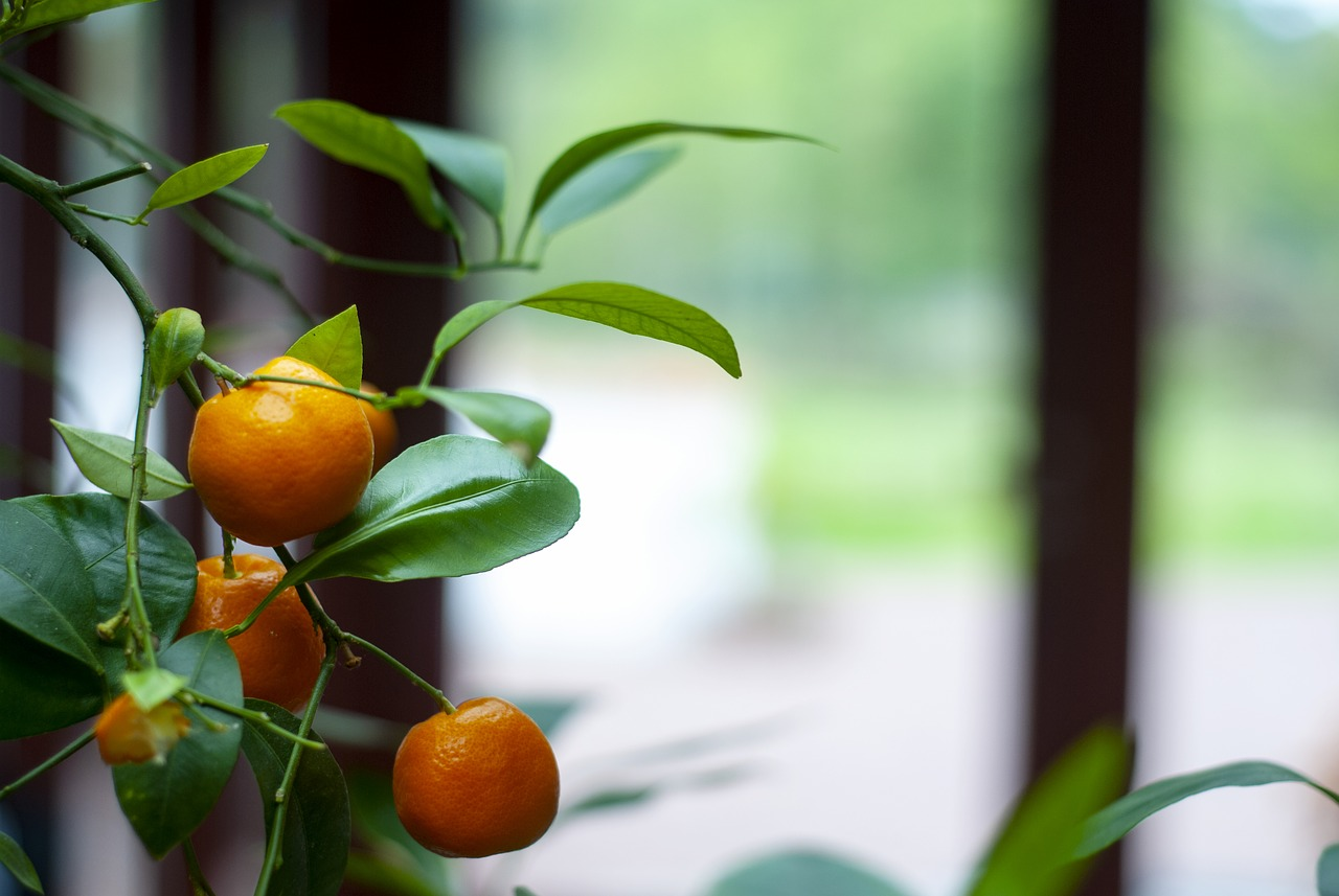 planter i orangeriet